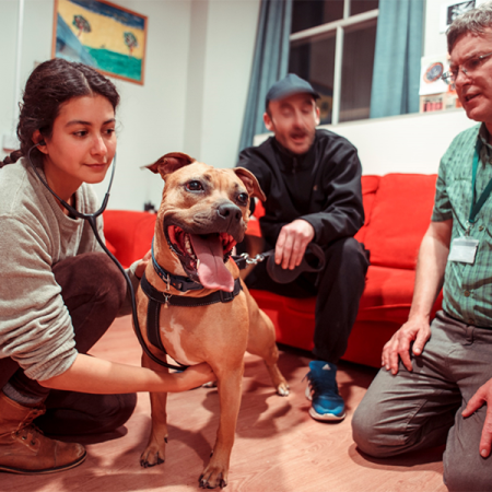 All4Paws: Vet students at work in the community