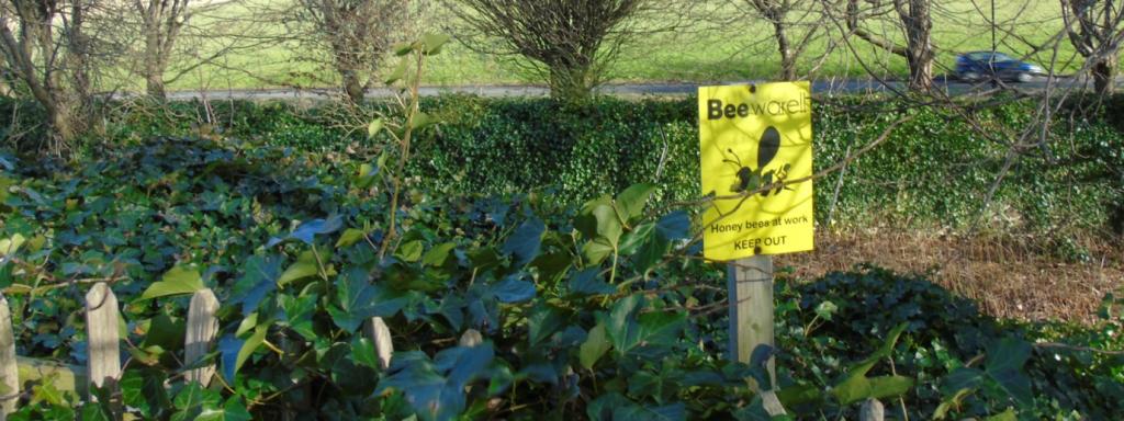 Biodiversity at Pollock Halls - apiary