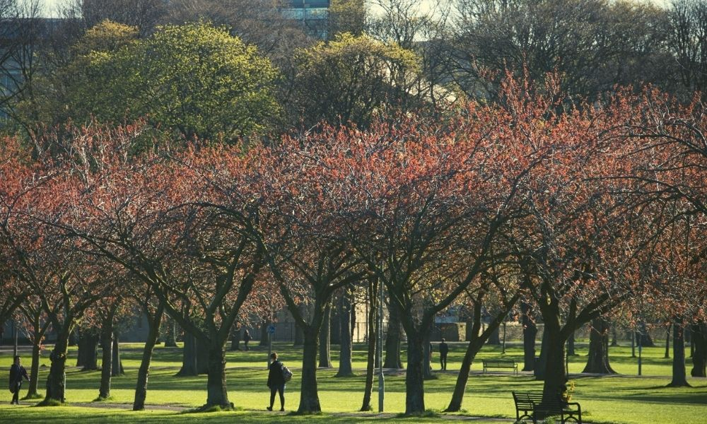 Photograph looking towards Edinburgh University Main Library from the Meadows