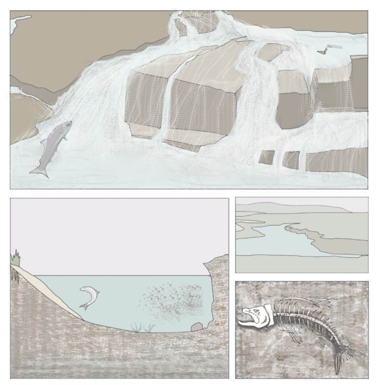 Architectural drawings of the erosion of a coastline with images of dead fish